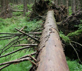 Harz – Das weisse Reh