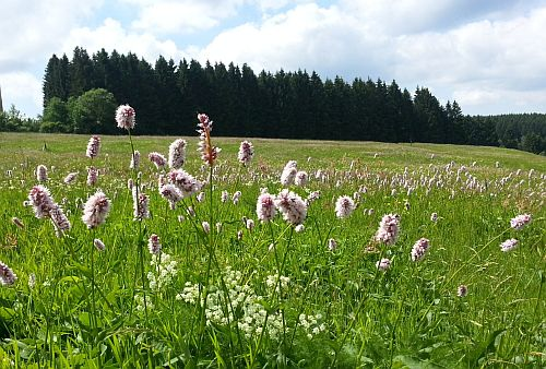 Buntenbock – Blumenbad