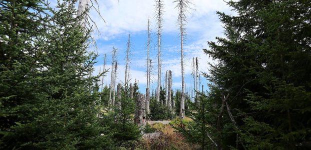 Oderteich und Waldwandel