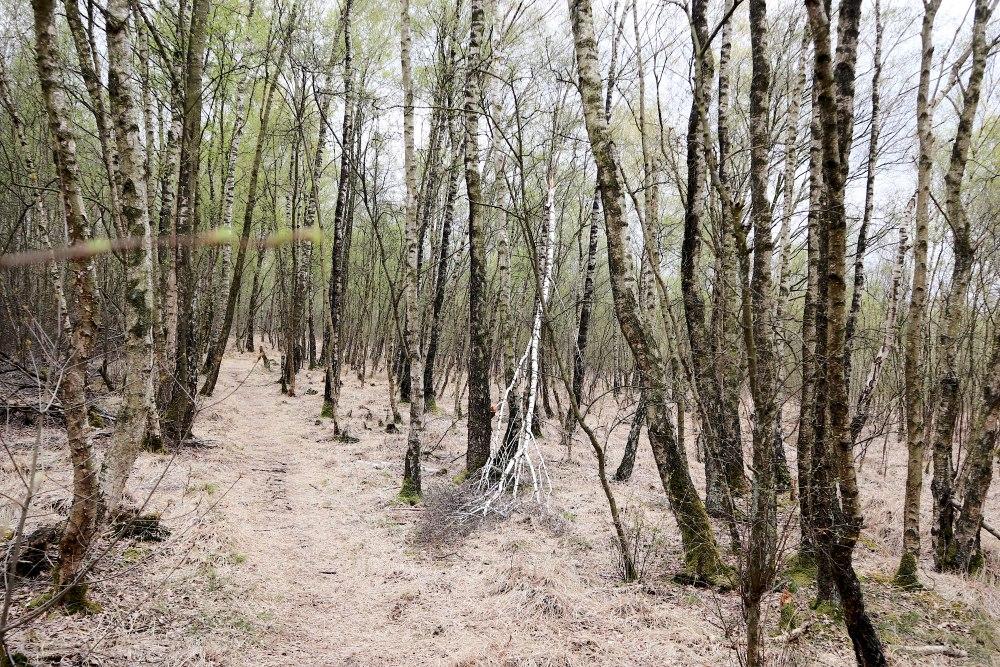 Frühling im Himmelmoor in Quickborn